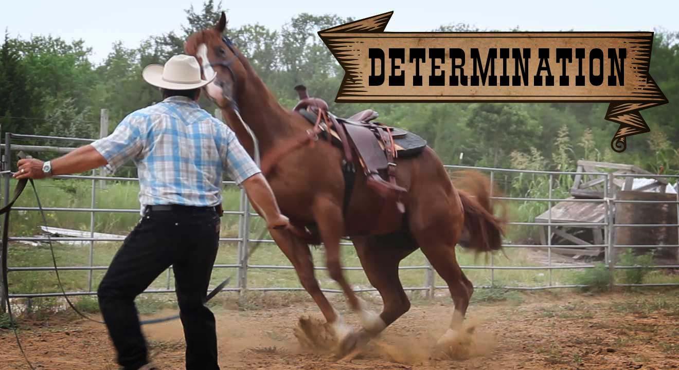 Video Insights: Determination